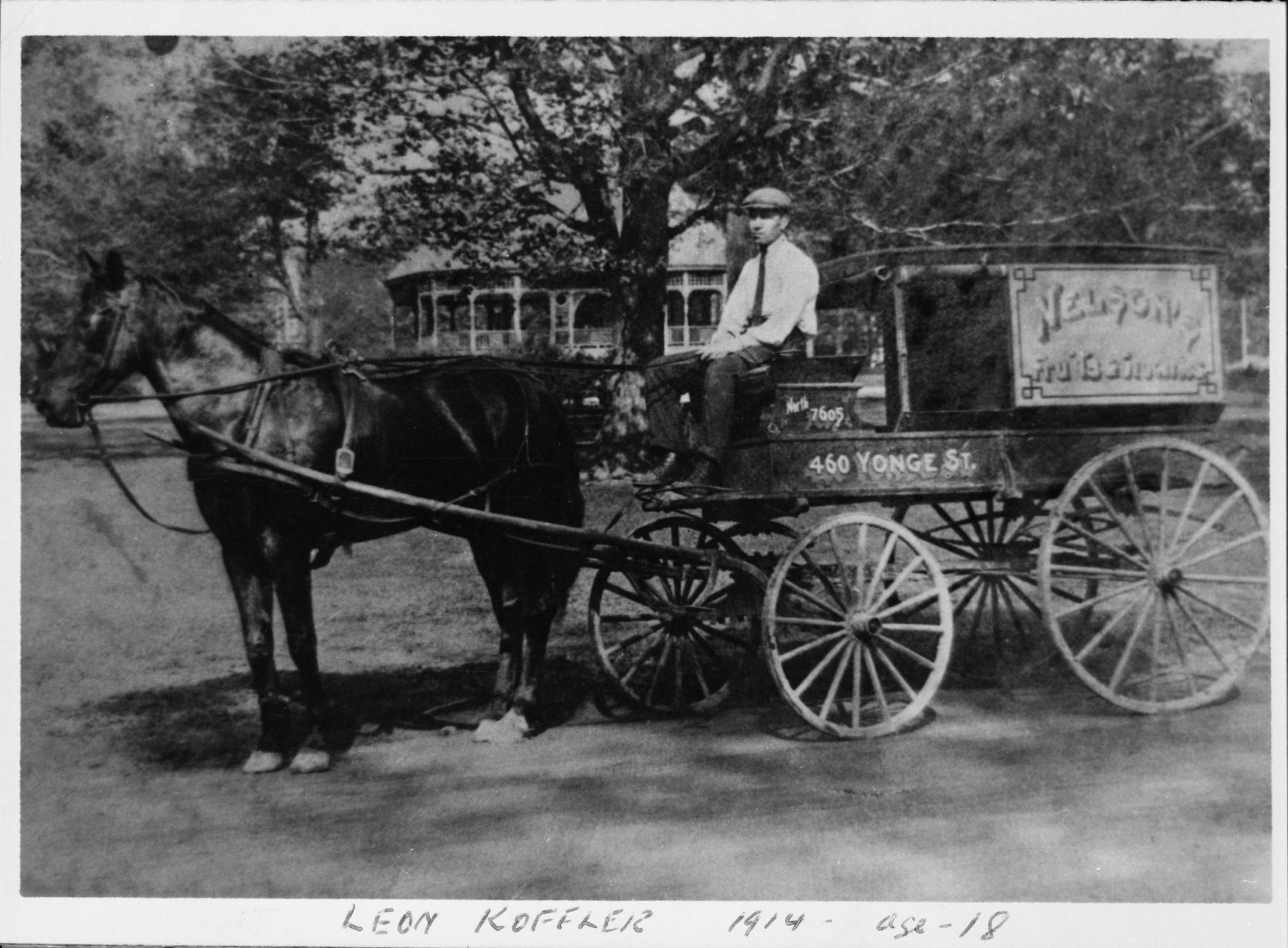 Leon Koffler seated in a horse-drawn buggy peddling fruit and vegetables at age eighteen in 1914. The sign on the buggy reads Nelson's with the address 460 Yonge Street on the side.   OJA, fonds 37, series 9, item 4.